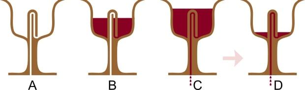 Sección de una copa de Pitagóras con las fases del líquido